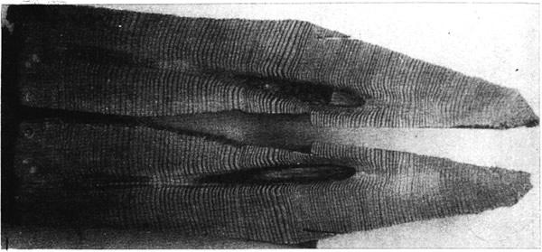 Фрагмент древесного ствола