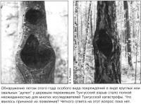 Повреждения деревьев