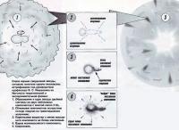 Схема взрыва сверхновой звезды